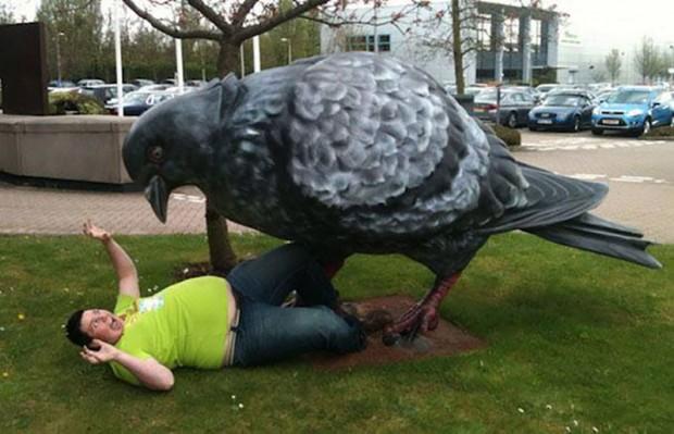 3. Yatmış yere, sonra güvercin suçlu!