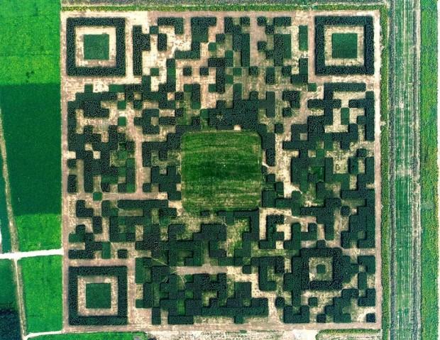 8. Ağaçlardan yapılma QR kodu