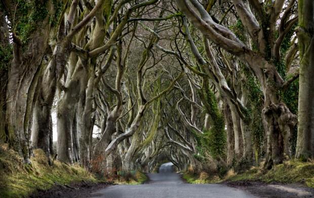 5. Dark Hedges, Kuzey İrlanda