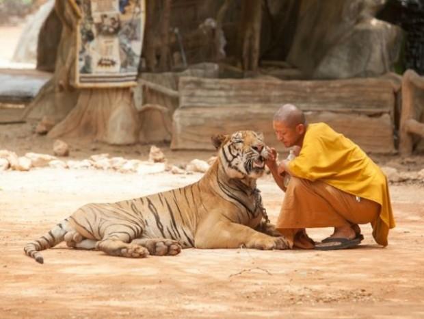 10. Tayland'da kaplanlarla sarılmak isteyenler..