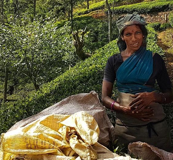 Bu da çay tarlasının en etkileyici kadını...