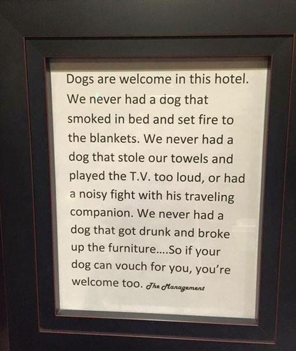 Otele köpek alan harika otelin notu: