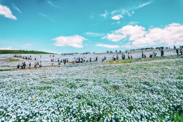 Bu çiçekleri görmek için yüz binlerce insan geliyor...
