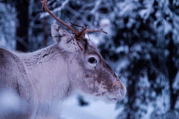 5. Finlandiya