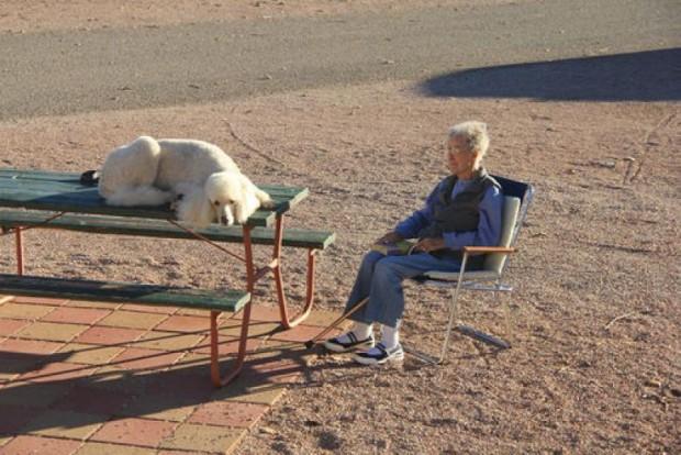 İşte Norma, oğlu, gelini ve tatlı kocaman köpeklerinin tatillerinden harika anılar..