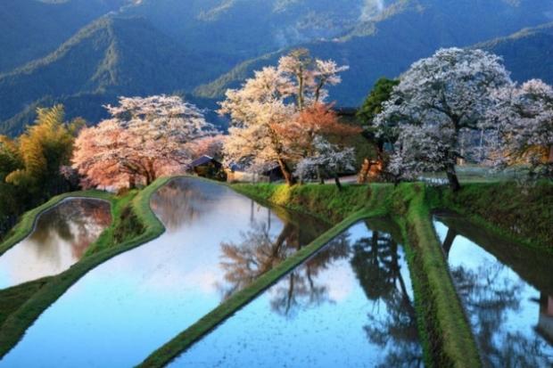 1. Japonya