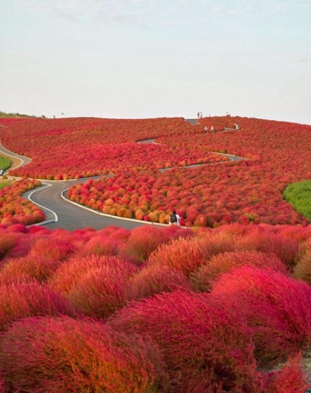 3. Japonya'da Hitachi Milli Parkı
