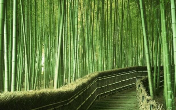 4. Japonya'da bambu ormanı