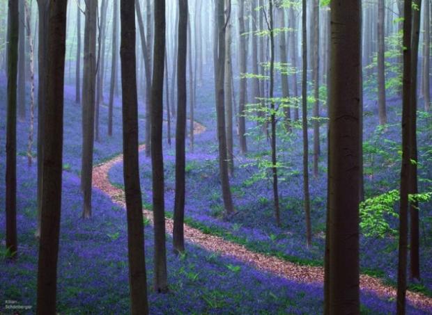 10. Belçika'da bir yaban mersini ormanı