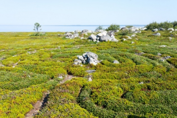 6. Bolşoy Zayatsky Adası taş labirentler, Rusya - Kayalar tarafından oluşturulan izleri takip ederseniz bir süre sonra girdiğiniz yerden çıkış yapabil