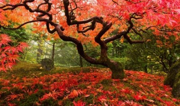 2. Portland Japon Bahçesi, ABD