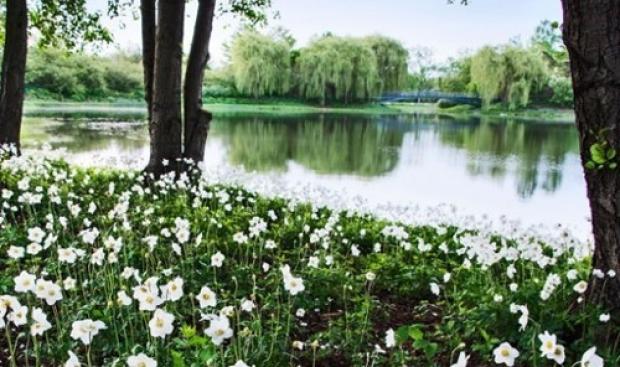 6. Chicago Botanik Bahçesi, ABD