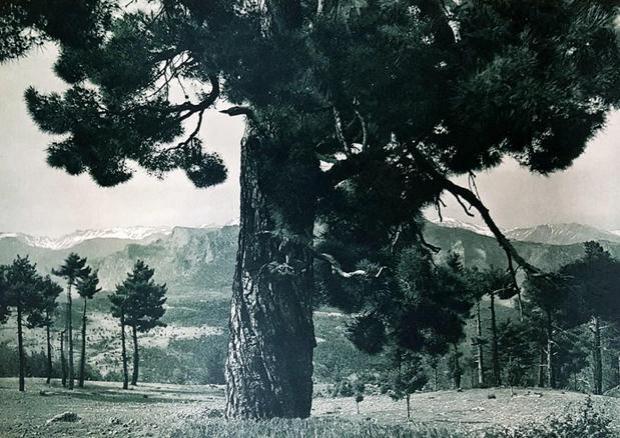 Toros – Nemrus Yaylası