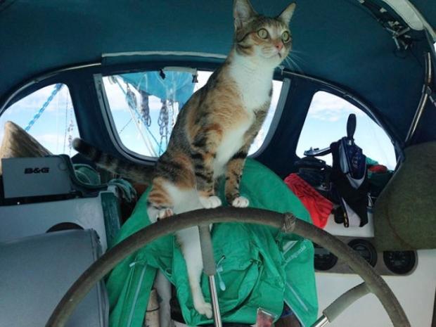 2006 yılından bu yana yelkenli teknesiyle dünyayı dolaşan maceracı gezgin, 2013 yılından beri yola kedisi Amelia ile devam ediyor.