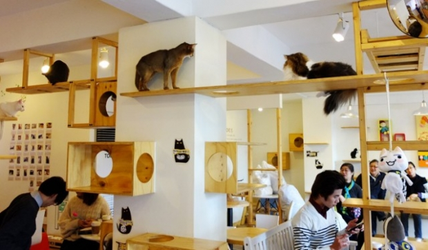 Cafe Cat – Japonya