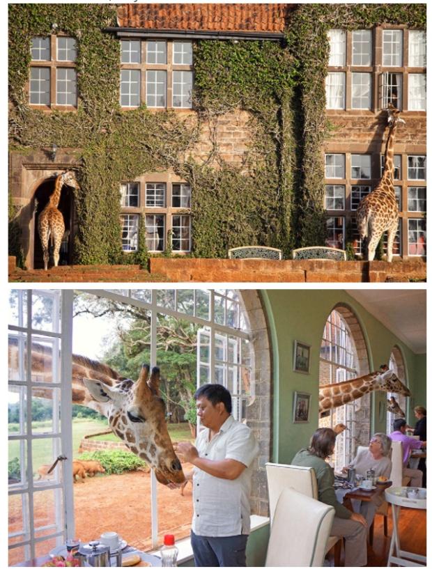 5. Zürafa malikanesi, Kenya
