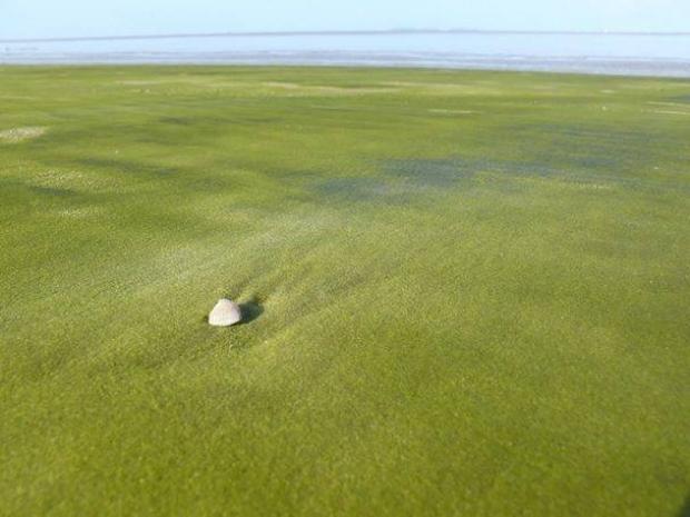 11. Yeşil Kum Sahili Kourou, Fransız Guyanası