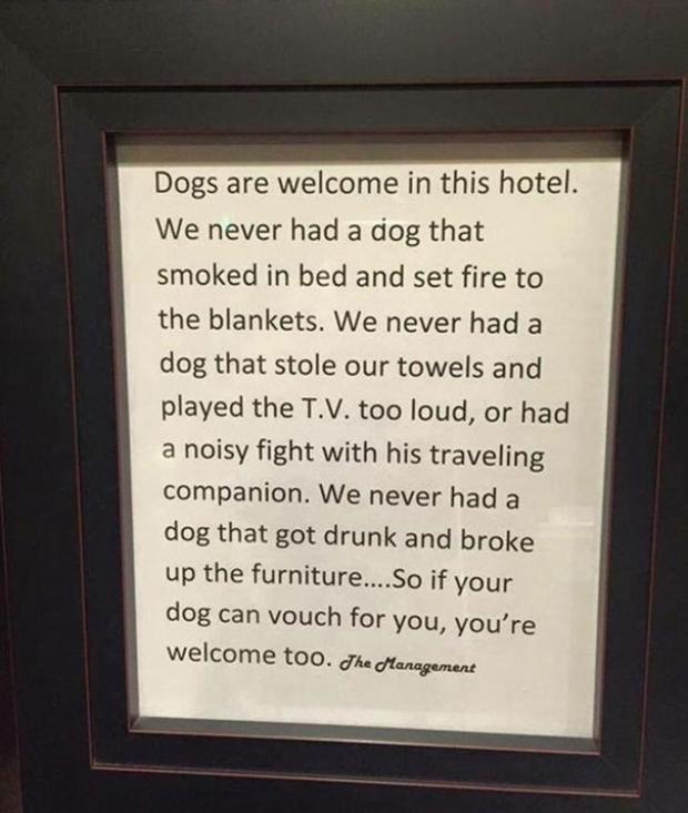 Köpekleri baş tacı yapan harika otelin yönetiminden bir mesaj: