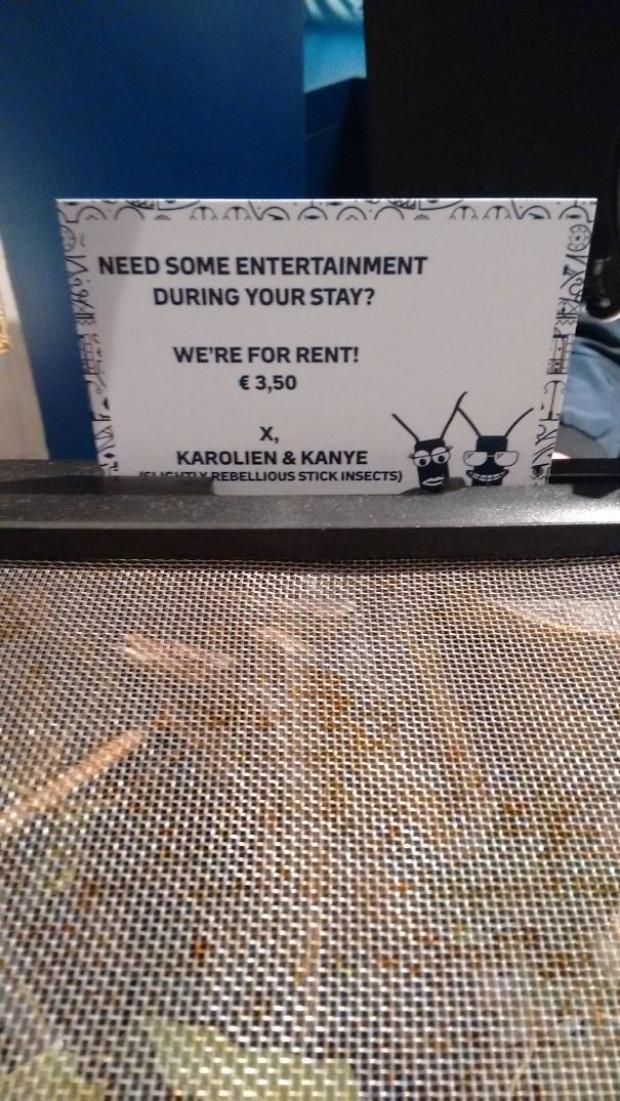 Odasına hareket gelsin isteyenler böcek kiralama hizmetinden faydalanabiliyorlar...