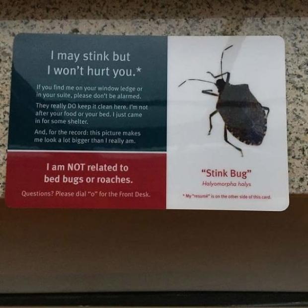 Misafirler gördüğü her böceği öldürmesin diye onların ağzından not bırakan doğa dostu otel