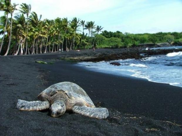 10. Punaluu Black Sand (Siyah Kum) Beach, Havai