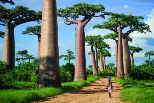 Baobab Bulvarı – Madagaskar