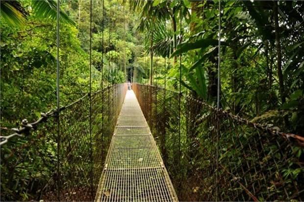 18. Arenal'da balta girmemiş ağaçların arasından geçen asma köprüde yürümek (Kosta Rika)