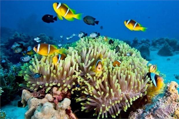 19. Pasifik Okyanusu kıyıları boyunca uzanan mercan resiflerini keşfedin (Avustralya)