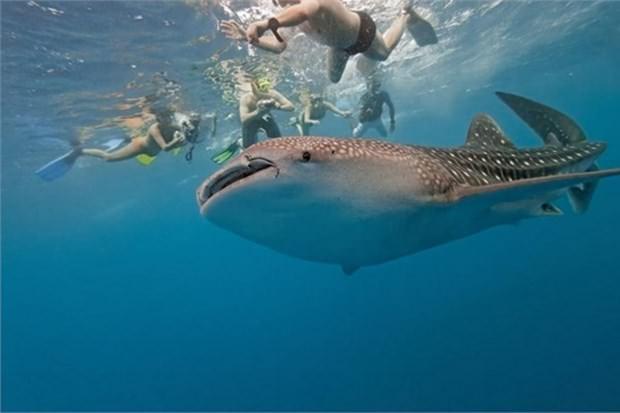 22. Maldivler'de köpek balıklarıyla yüzmek (Maldiv Cumhuriyeti)