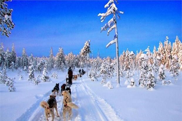 27. Lapland'da köpek kızağı yapmak (Finlandiya)