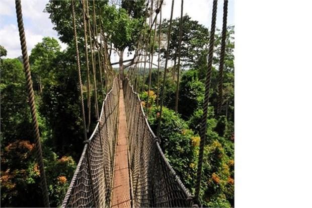 34. Kakum Milli Parkı'nda bu köprüde yürüyün (Gana)
