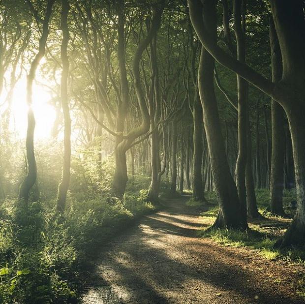 5. Baltık kıyısında, korkutucu hayalet ormanı