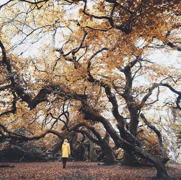6. Bad Nenndorf'daki Spa Parkının bükülen ağaçları
