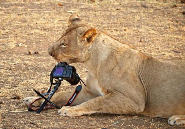 20-Fotoğrafçı